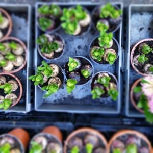 garteling.at Gartenblog Östzerreich Ulli Cecerle-Uitz