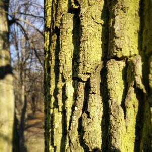 garteling.at Gartenblog Österreich Cecerle Baumrinde