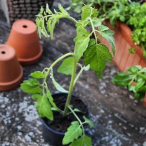 garteling-.at Gartenblog Österreich Ulli Cecerle-Uitz