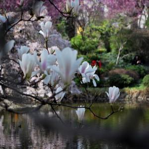 garteling-gartenblog-cecerle-japanischergarten