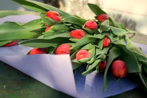 garteling.at Gartenblog Österreich Cecerle Tulpen