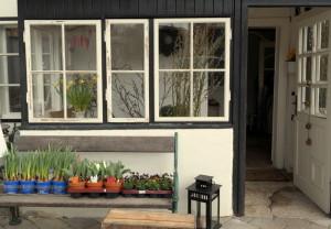 Blumenwerkstatt unverblümt Gartenblog garteling.at
