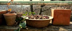 garteling.at Gartenblog Öaterreich Ulli Cecerle-Uitz