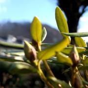 garteling.at Ulli Cecerle-Uitz Gartenblog