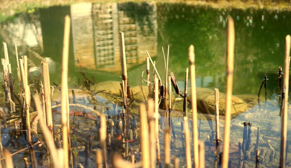 garteling.at Gartenblog Ulli Cecerle-Uitz Österreich