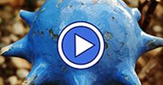 Garteling Blog Videos