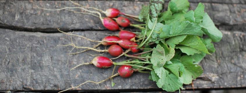 garteling-Gartenblog-Cecerle-uitz-garten-