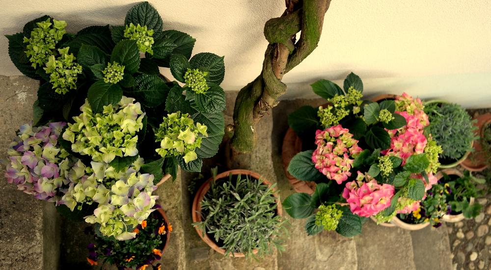 garteling.at Gartenblog Österreich Ulli Cecerle-Uitzgarteling.at Gartenblog Österreich Ulli Cecerle-Uitzgarteling.at Gartenblog Österreich Ulli Cecerle-Uitz