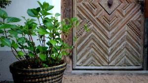 garteling.at Gartenblog Ulli Cecerle-Uitz