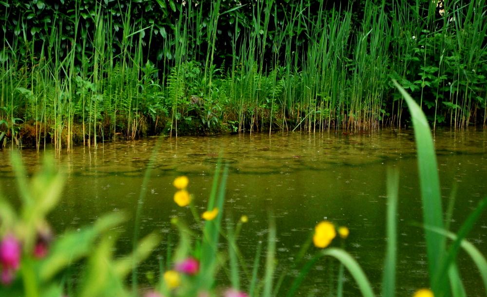 gartelinmg.at Gartenblog Österreich Ulli Cecerle-Uitz