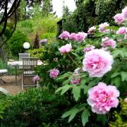 gartrling.at Gartenblog Österreich Ulli Cecerle-Uitz