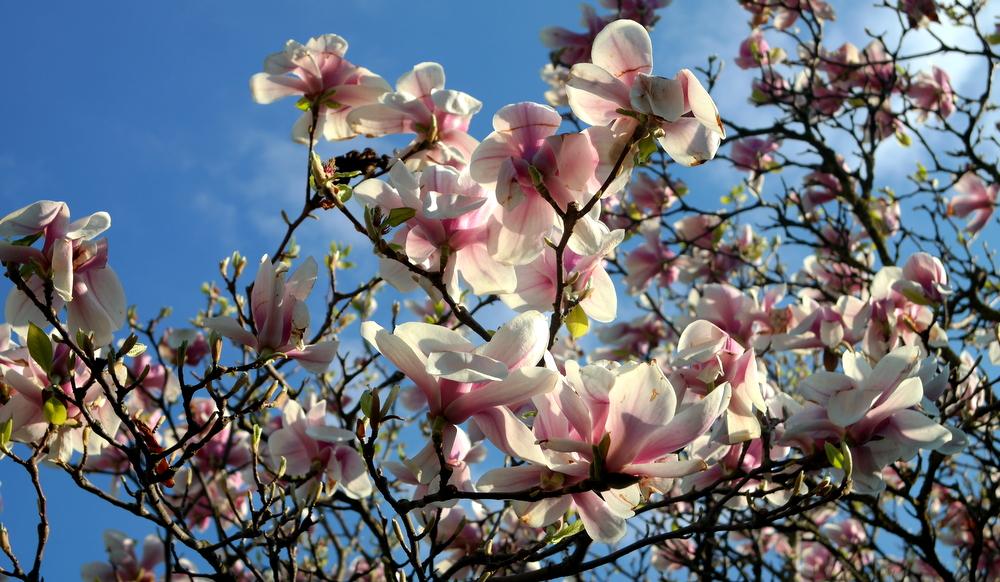 garteling.at Gartenblog Österreich Ulli