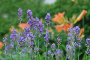 garteling.at Gartenblog Österreich Ulli Cecerle-Uitz garteling.at Gartenblog Österreich Ulli Cecerle-Uitz
