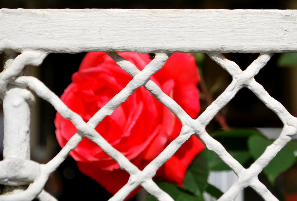 garteling.at Gartenblog Österreich Ulli Cecerle-Uitz Gästehaus Ria im roaring-50ies-Style