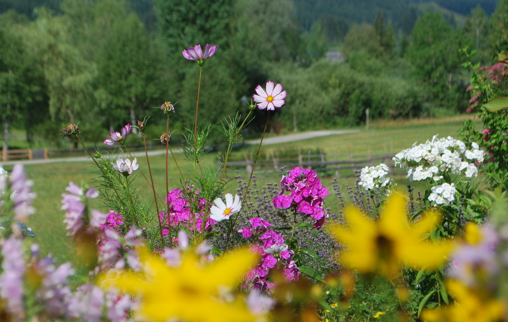 garteling_Ulli_Cecerle-Uitz_Gartenblog