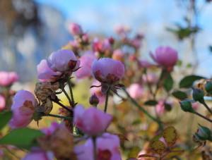 Gartening_garteling_Gartenblog_Österreich_Cecerle-Uitz