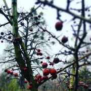 garteling-Gartenblog-Österreich-Cecerle-Uitz-gardening
