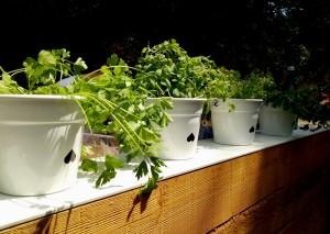 garteling-cecerle-gartenblog-spargel-biospargel-ausbauernhand