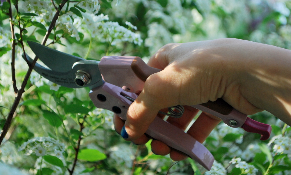 garteling-cecerle-gartenblog-gardengirls-gartenwerkzeug-