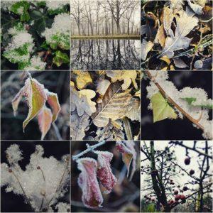 garteling-Gartenblog-Cecerle-shortstory-01