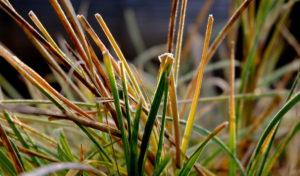 garteling-Gartenblog-Cecerle-uitz-garten-winter