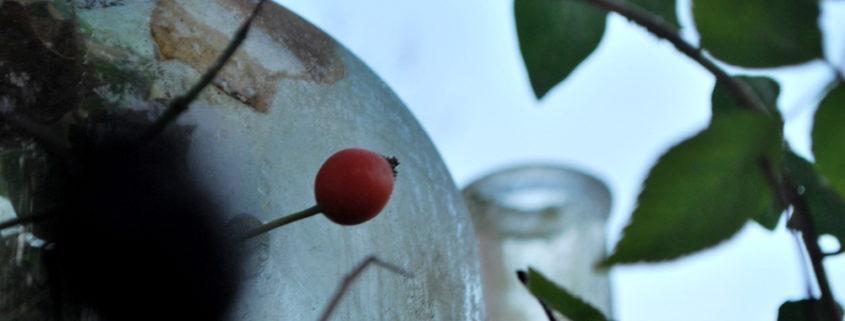 garteling-Gartenblog-Cecerle-uitz-garten-tulpen-setzholz