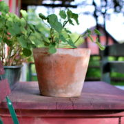 garteling-gartenblog-cecerle-jagawirt