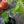 7 Experten-Tipps für Chili, Paprika & Tomaten
