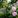 Geplantes Chaos: Wilder Garten im goldenen Schnitt