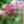 Anleitung zum perfekten Blumenstrauß