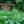 10 schlaue Sommergarten-Tipps