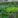 Waldviertler Gemüsegarten-Tour: Welche Sorten passen zueinander?