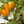 Hohes C des Gartelns: Experten-Tipps für Zitruspflanzen